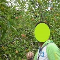 原観光りんご園の写真