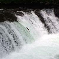 さくらの滝の写真