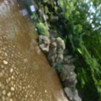 神奈川県立四季の森公園の写真