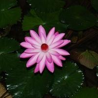 広島市植物公園の写真
