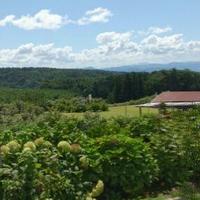 ブルーベリー地頭農園の写真