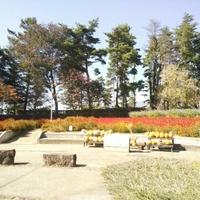 南八ケ岳花の森公園の写真