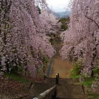 徳島県立神山森林公園イルローザの森の写真