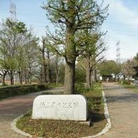 柏ふるさと公園の写真