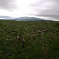 岩木山観光りんご園の写真