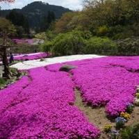 花の郷 滝谷花しょうぶ園の写真