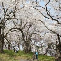 烏帽子山公園の写真