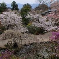 竹林院の写真