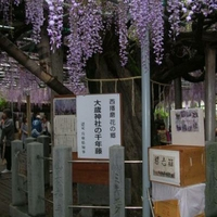 大歳神社の写真