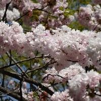 都幾山慈光寺の写真