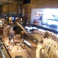 いのちのたび博物館 北九州市立自然史・歴史博物館の写真