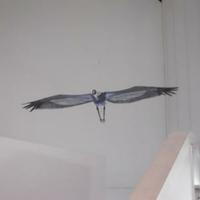 出水市ツル博物館クレインパークいずみの写真
