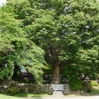 高島公園の写真