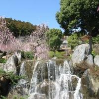 花の奥山高原の写真