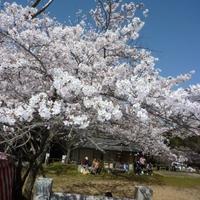 田代公園の写真