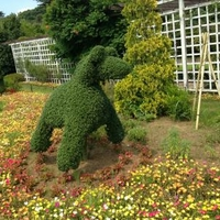 清水公園花ファンタジアの写真