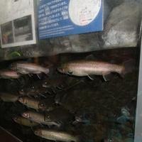 森の中の水族館。山梨県立富士湧水の里水族館の写真