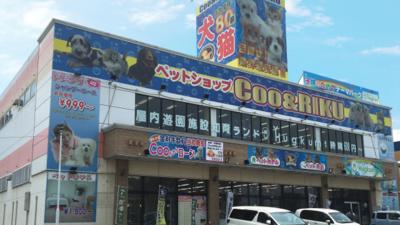 店舗 クーアンドリク 「ペットショップCoo&RIKU(クーアンドリク) 新帯広店」(河東郡音更町