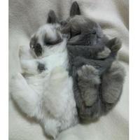 うさぎ専門店 ARPA's Rabbitryの写真