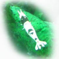 新潟NGBRの写真