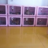 DogLine犬舎の写真