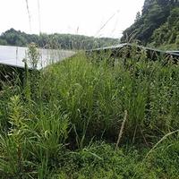 かめさわ 鹿児島県霧島市の草刈業者の写真