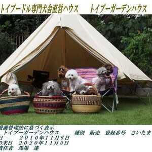 プードル ブリーダー 埼玉 トイ