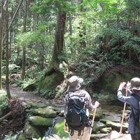 熊野古道エコツアー くまの体験企画の写真