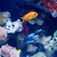 アクアリウムレンタル匠水景・熱帯魚水槽の写真