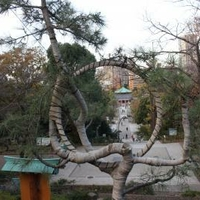 寛永寺清水観音堂の写真