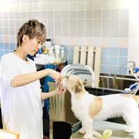 Dog salon Croutonの写真