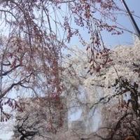 榴岡公園の写真