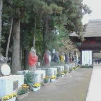 茂林寺の写真