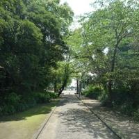 江田神社の写真