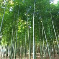 若竹の杜若山農場の写真