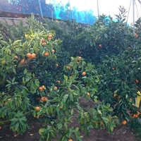 水本オレンジガーデンの写真