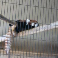 鯖江市西山動物園の写真