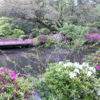 春日大社 萬葉植物園の写真