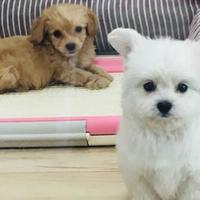 ペットショップ Puppies woofの写真