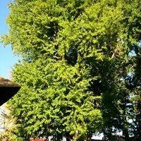 新宮熊野神社「長床」の写真