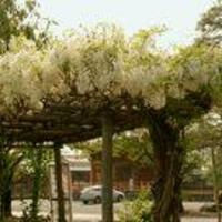 拝島公園の写真