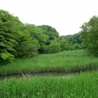 北本自然観察公園の写真
