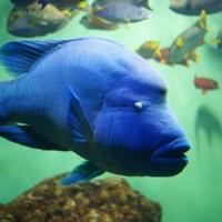 葛西臨海水族館の写真