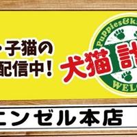 ペットショップエンゼル 横浜本店の写真