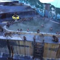 函館市営熱帯植物園の写真