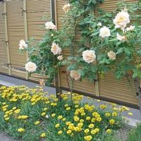 株式会社 庭の川島の写真