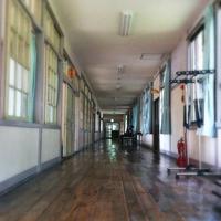 星ふる学校「くまの木」の写真