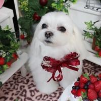 LeaLea Dogの写真