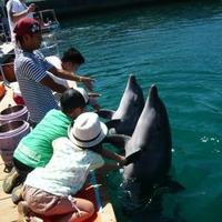 うみたま体験パーク つくみイルカ島の写真