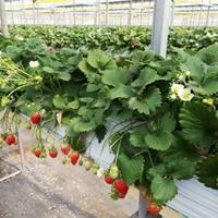 果実の里 原田農園の写真